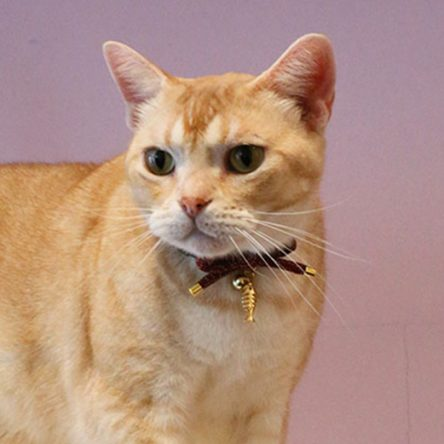 Buterfly Bowknot Cat Collar With  Fish Bone Charm