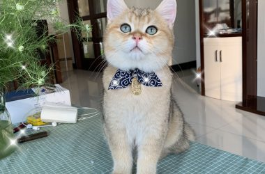 Choosing a Cat Collar