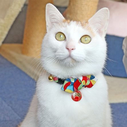 Diamond Shaped Bowtie Cat Collar with Japan Lucky Daruma Charm